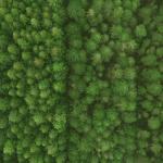 metsä ylhäältäpäin kuvattuna
